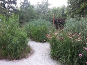 A path through tall grass and wildflower plantings